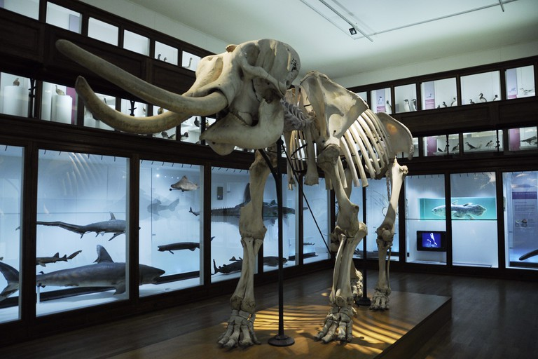 Nantes Natural History Museum