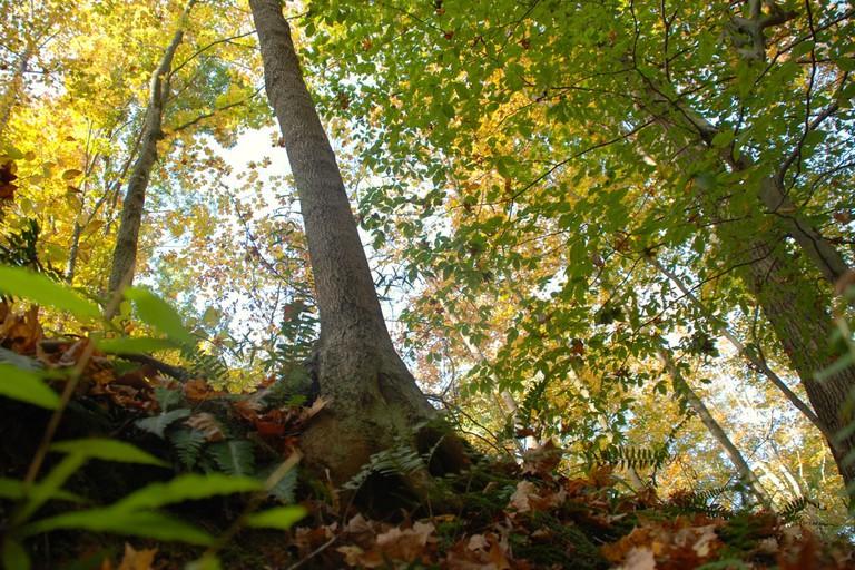 Hoosier National Forest   © Carly Jane Casper/Flickr
