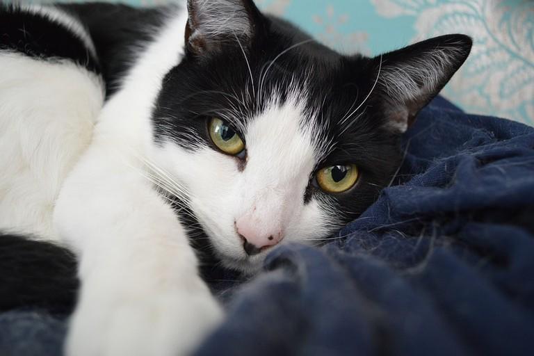 https://pixabay.com/en/animal-portrait-cute-mammal-cat-3342861/