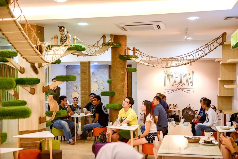 Interior of CATS Cafe
