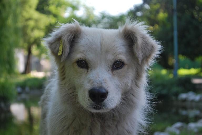 https://pixabay.com/en/dog-white-profile-background-2366766/