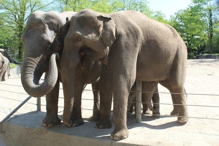 elephant-1403996_960_720