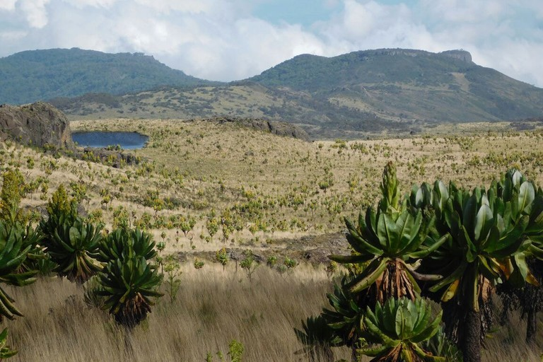 Mt. Elgon 2