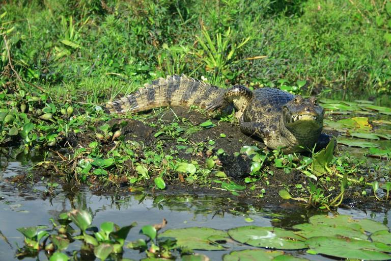 The Ibera Wetlands