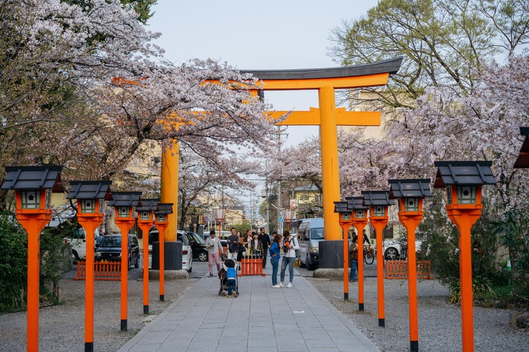 CHERRY BLOSSOM-HIRANO SHRINE-KYOTO-JAPAN