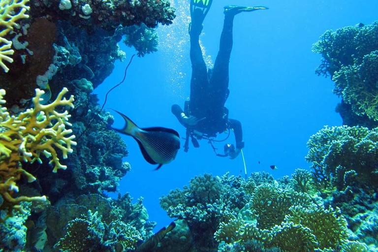 SCUBA diver exploring reef.