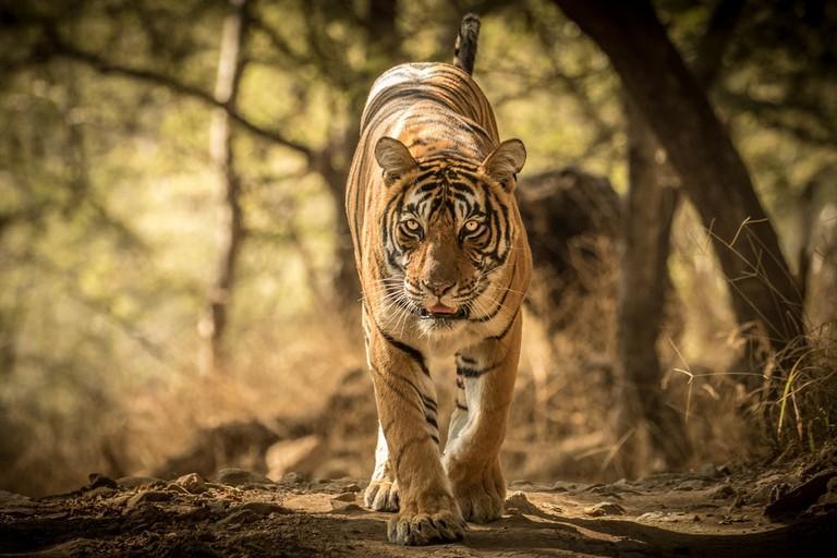 © Kuppa Srinivas/Shutterstock
