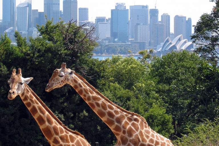 Taronga Zoo © Jan Derk / Wikimedia Commons