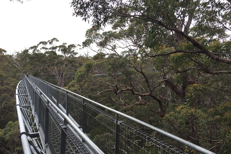 Valley of the Giants Tree Top Walk   © Tom Smith