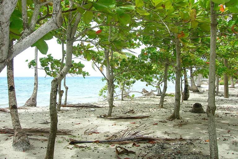 Beach at Utila Island, Honduras
