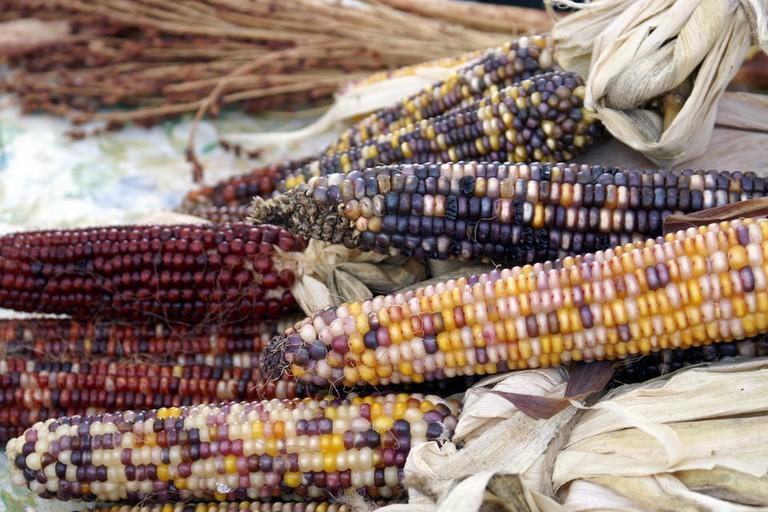 Bloomington Farmers Market | © Gemma Billings / Flickr