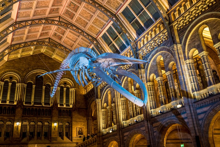 A blue whale skeleton hangs in the Natural History Museum's Hintze Hall