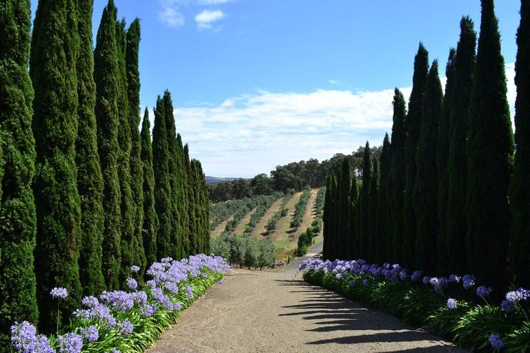 Laneway in the Yarra Valley © Jan Bever / Flickr