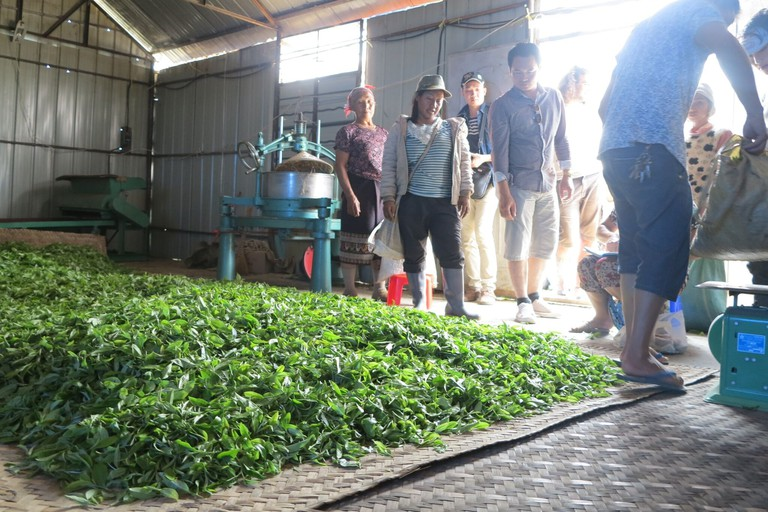 Phongsaly Tea Trade_preview
