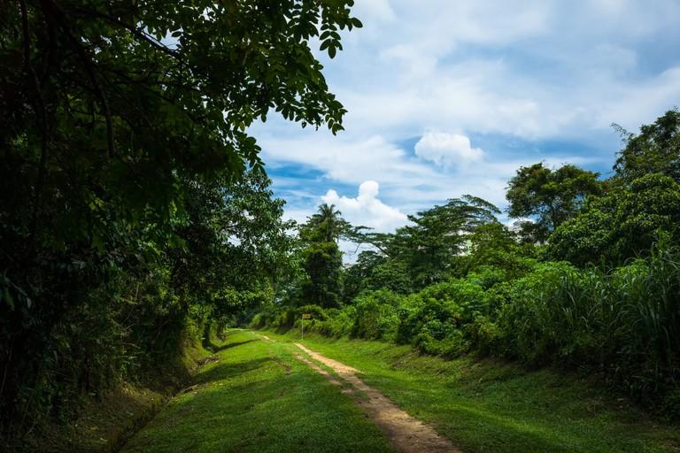 Bukit Timah Nature Reserve, Singapore