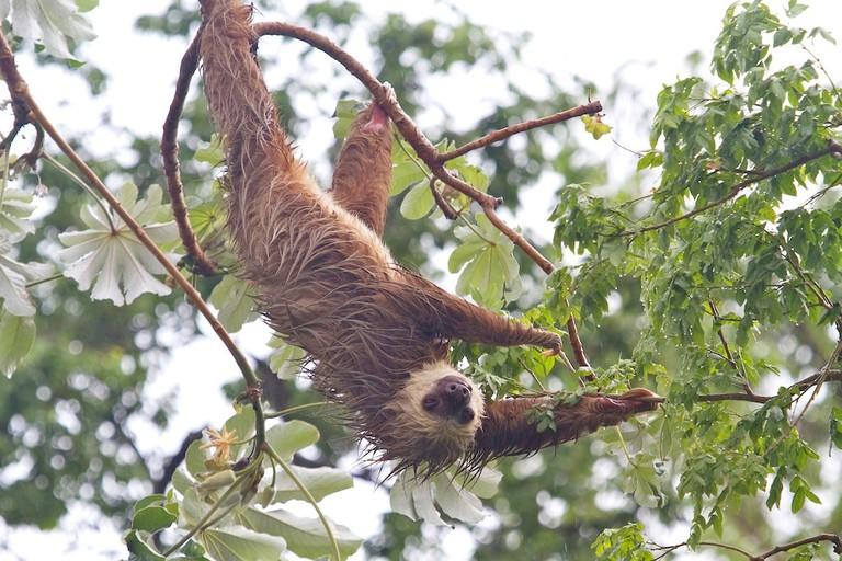 sloth_Fotor