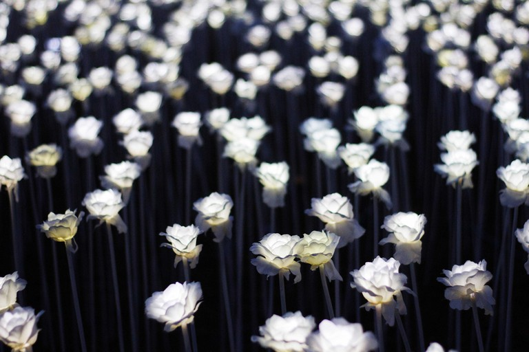 A section of the 10,000 Roses cafe showing the white plastic LED roses