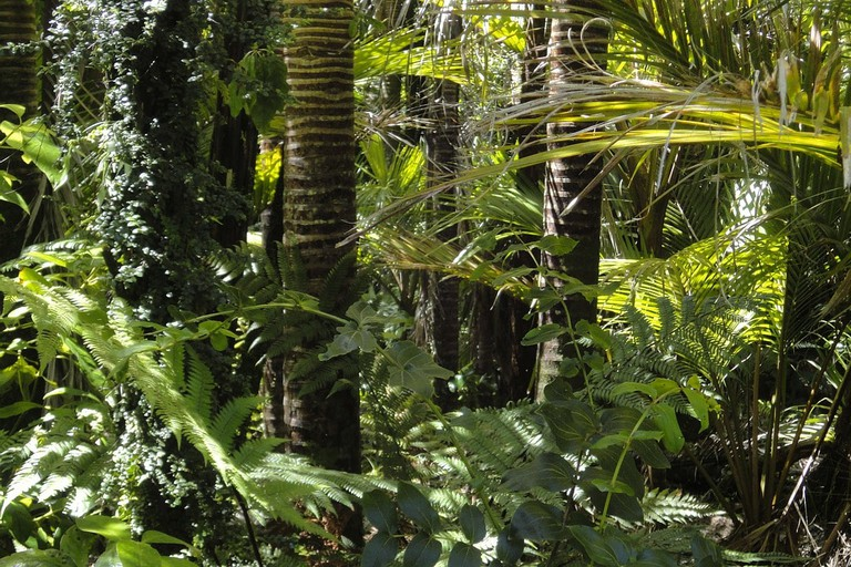 rainforest-78516_1280