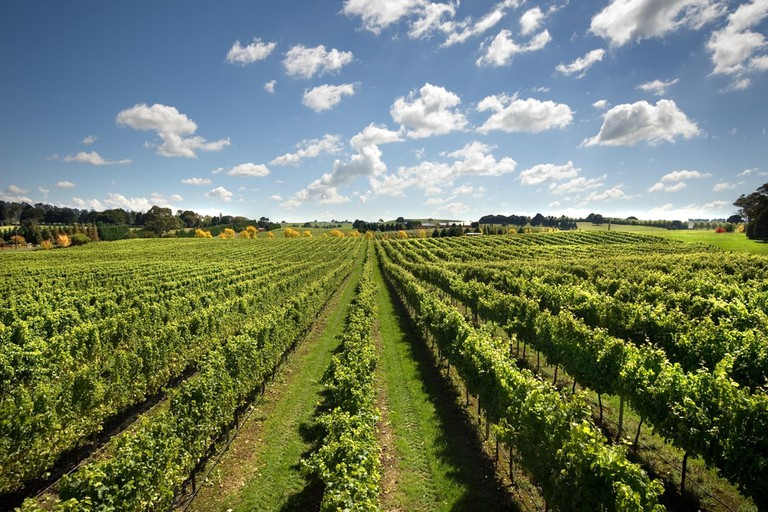 Vineyard, Sutton Forest, New South Wales, Australia