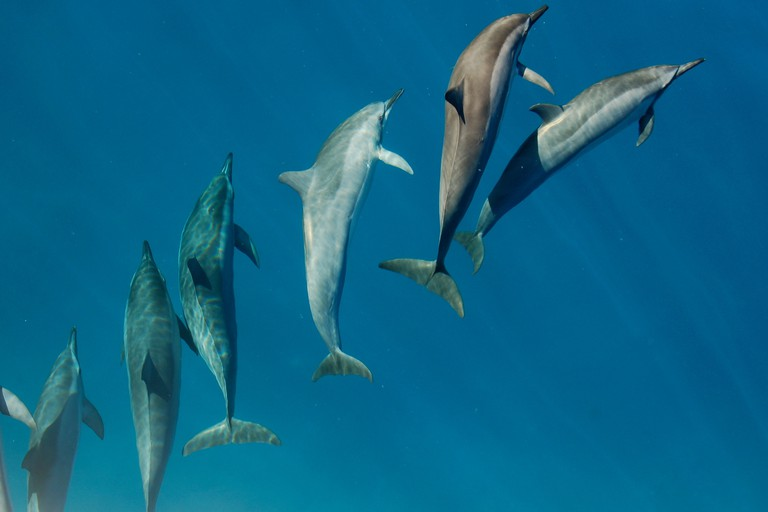 Swimming with a pod of dolphins in Hawaii | © Yale Cohen/Unsplash