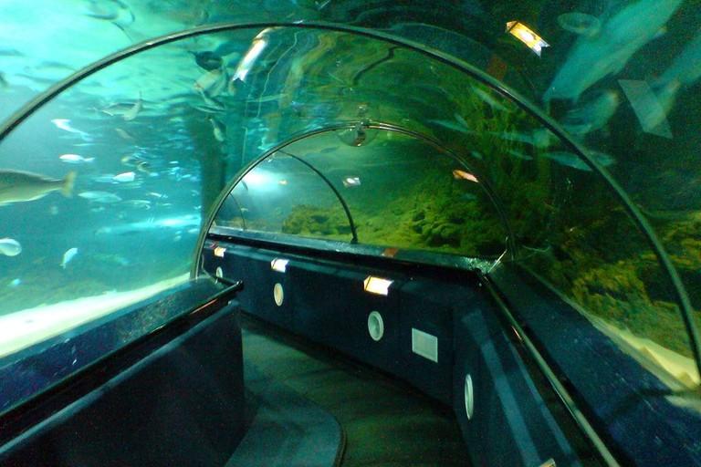 1024px-Aquarium_Tunnels,_Kelly_Tarlton_Aquarium