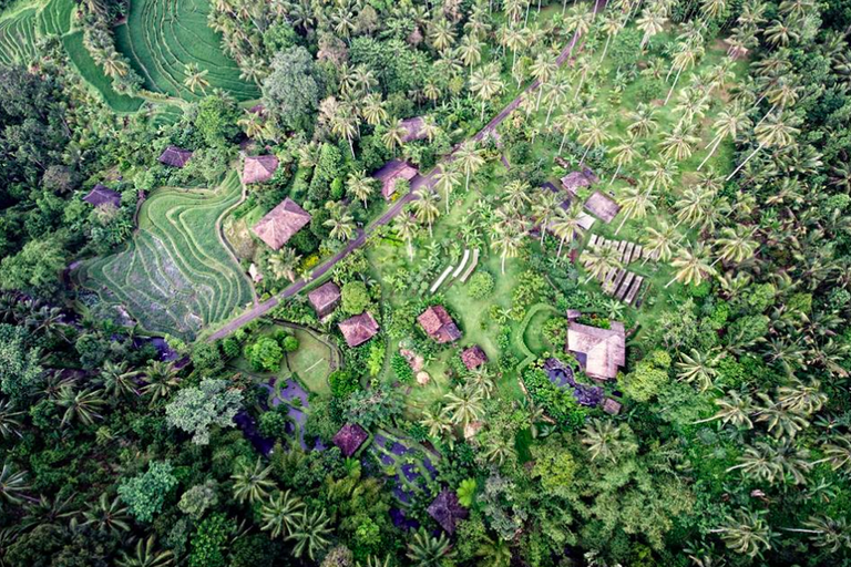 The emerald green slope that is home to Bali Eco Stay