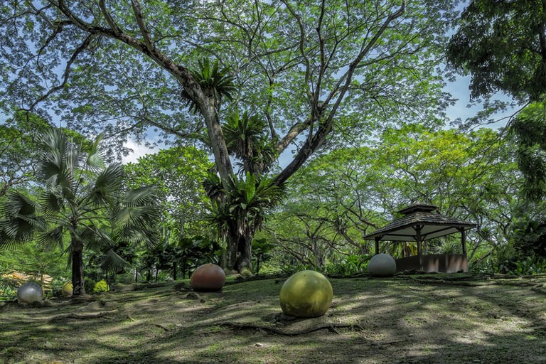 The Rain Tree of Youth Park Penang, Malaysia