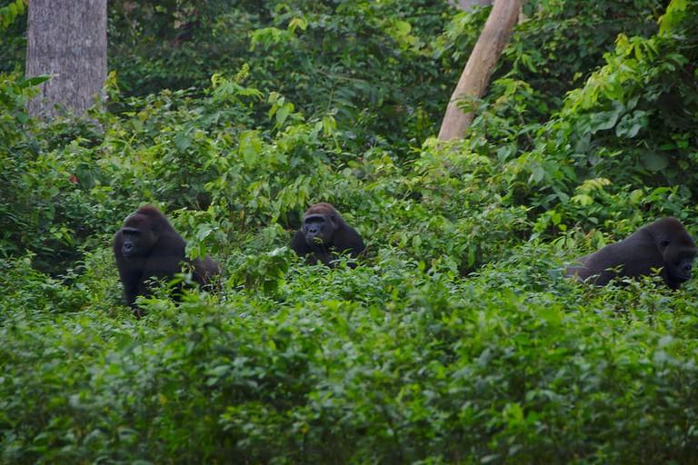 Ecopark Yaounde