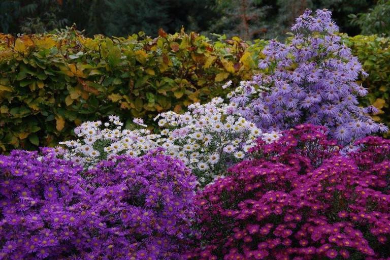 Flowers in bloom at Old Court Nurseries & Picton Garden