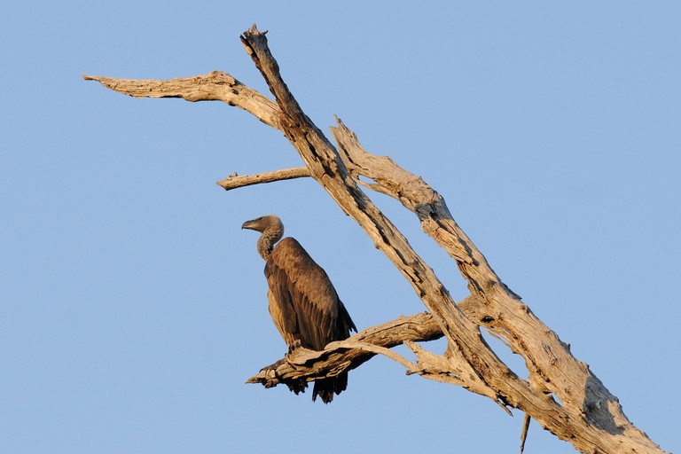 vulture-1653013_1920