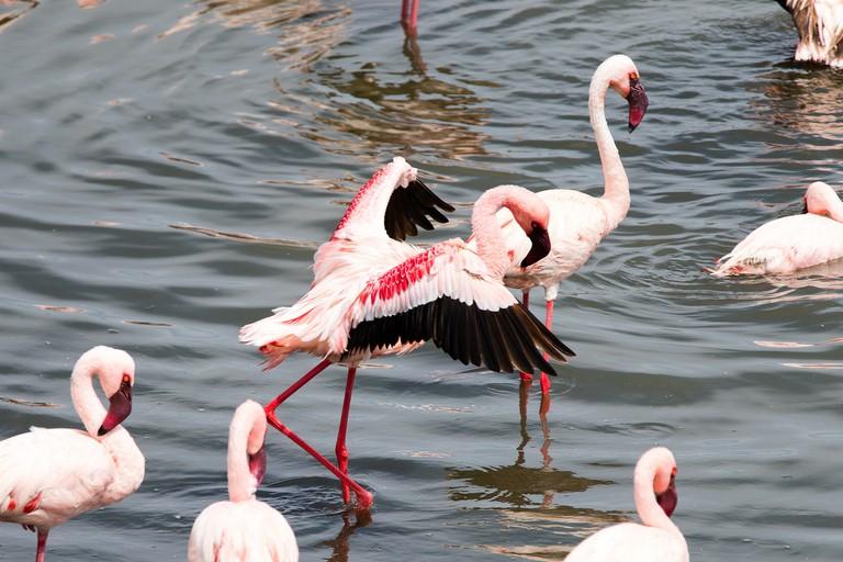 Flamingos in Arusha National Park