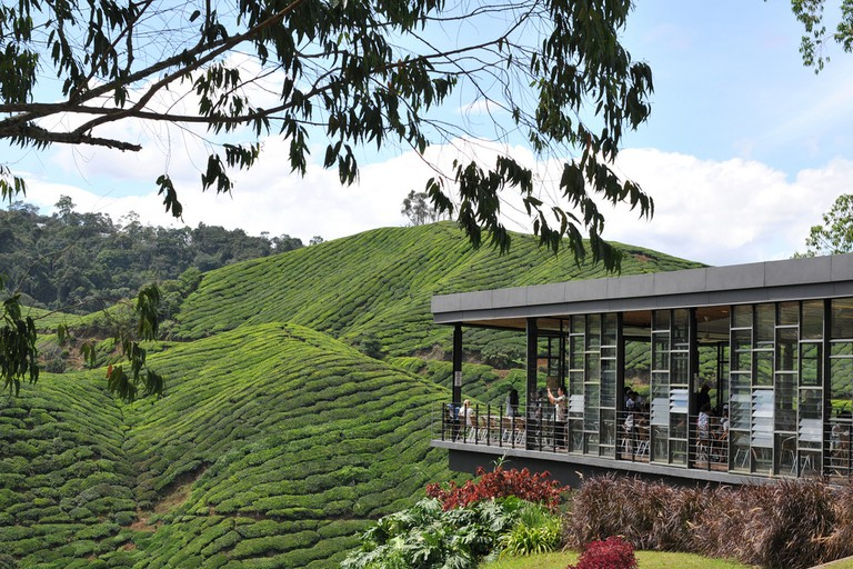 best cafe coffee shops in cameron highlands