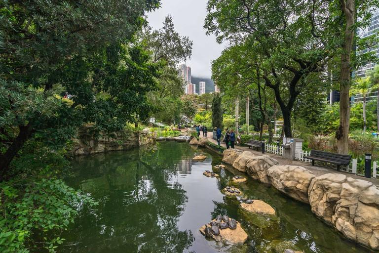 Small beautiful pond at Hong Kong Park with turtles on the rocks. Hong Kong, January 2018