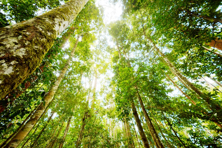 Primary Rainforest, Borneo, Malaysia