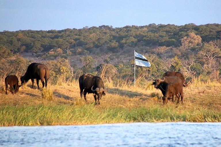 741px-Sedudu_Island_Botswana_(2)