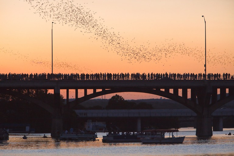 Bats Congress Bridge in Austin, Texas, USA.