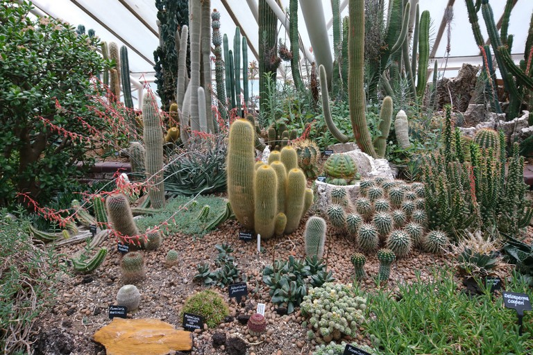There are over 2,000 species of plant at the Barbican Conservatory