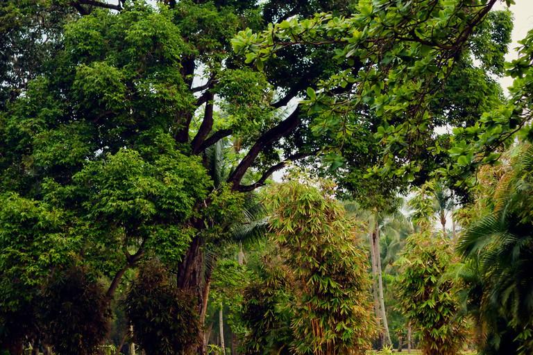 Tropical jungle on the way to mount Bintan, Island Bintan.
