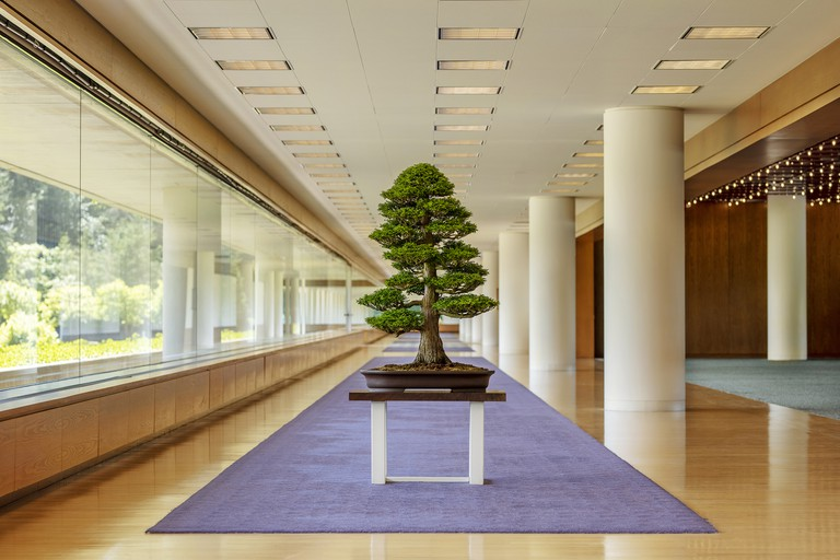 Visit the Pacific Bonsai Museum for a close look at the startling beauty of bonsai trees