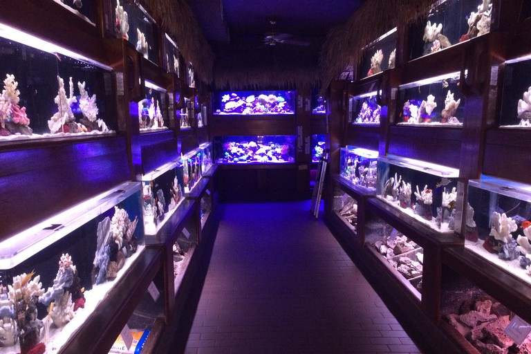 Inside of Old Town Aquarium