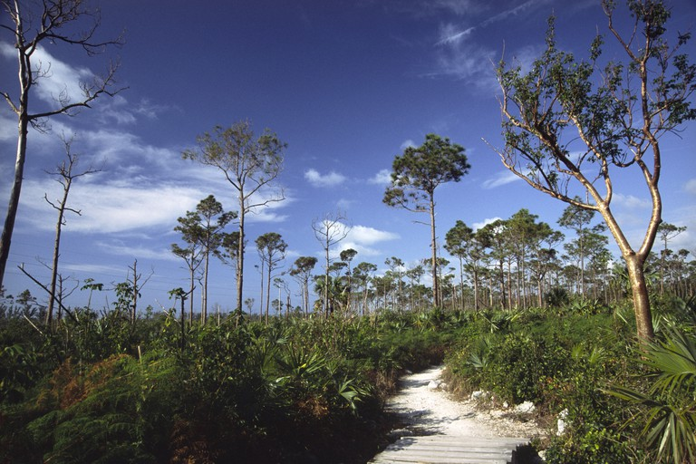 Path in Lucayan National Park, Grand Bahama Island, Bahamas.