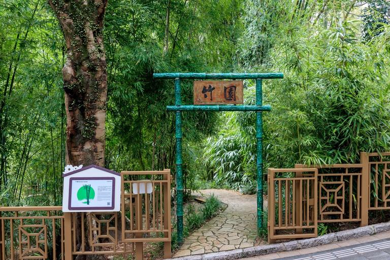 Bamboo Garden At Hong Kong Zoological and Botanical Gardens