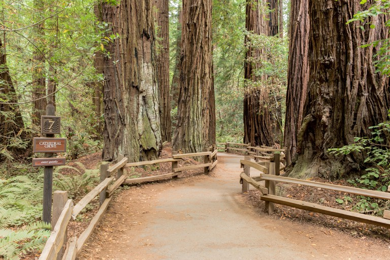 The wide paths in the Muir Woods National Monument make it easy to explore