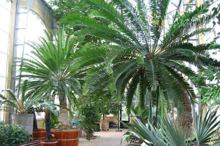 Marvel at plant species at De Horus Botanicus