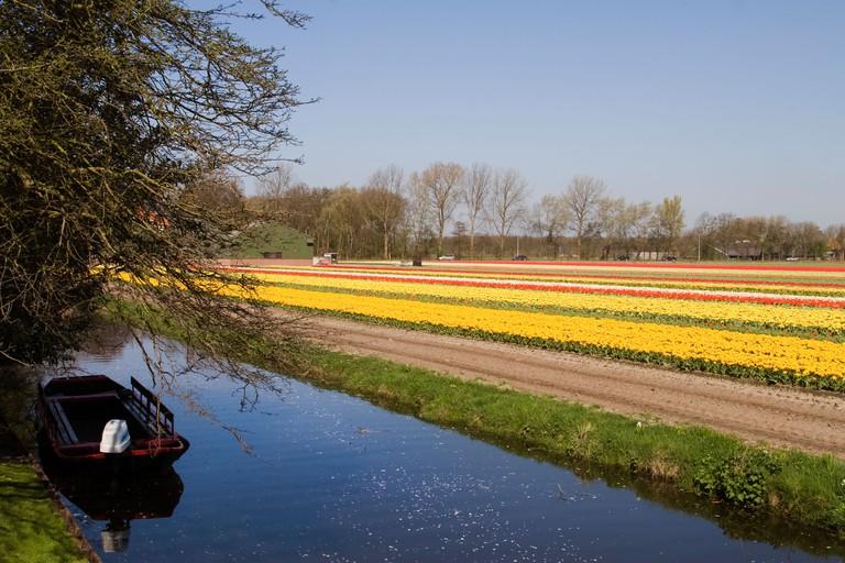 Tulip fields at Keukenhof.