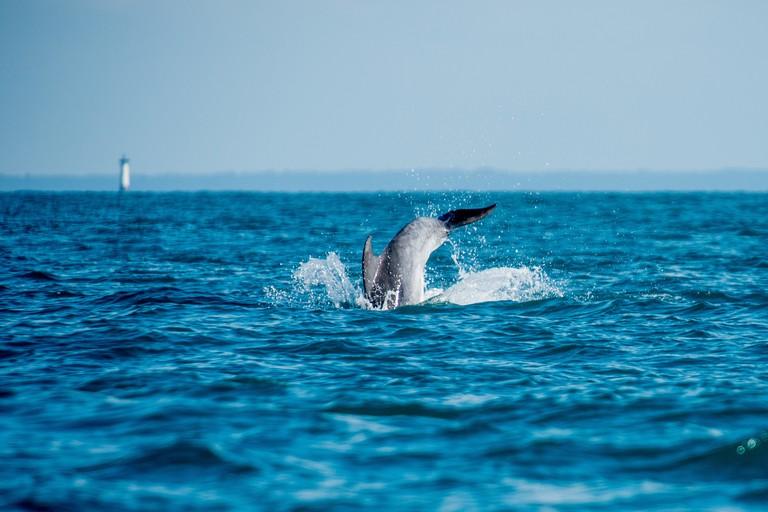 Participez a l'observation des grands dauphins a Port-MerExperience bretonne