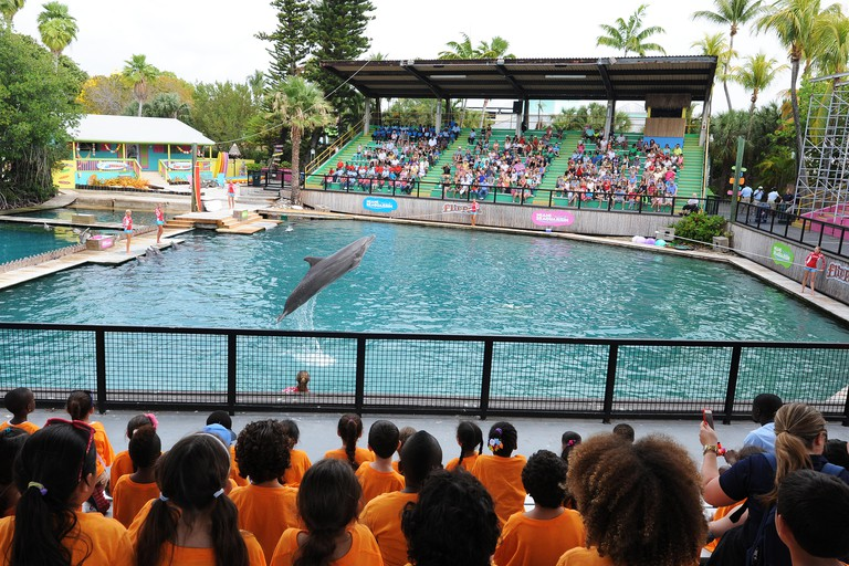 People watch a dolphin perform at Miami Seaquarium.