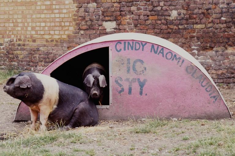 Pigsty, Hackney City Farm, London