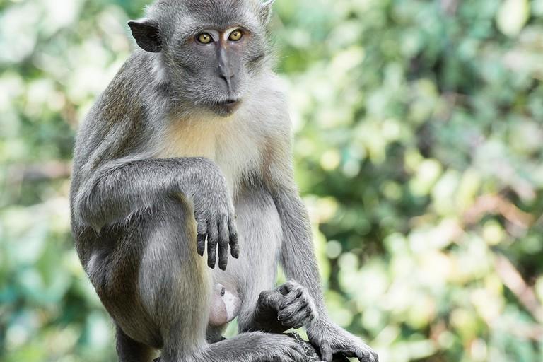 Squirrel monkey at Monkey Jungle, Miami, Florida.