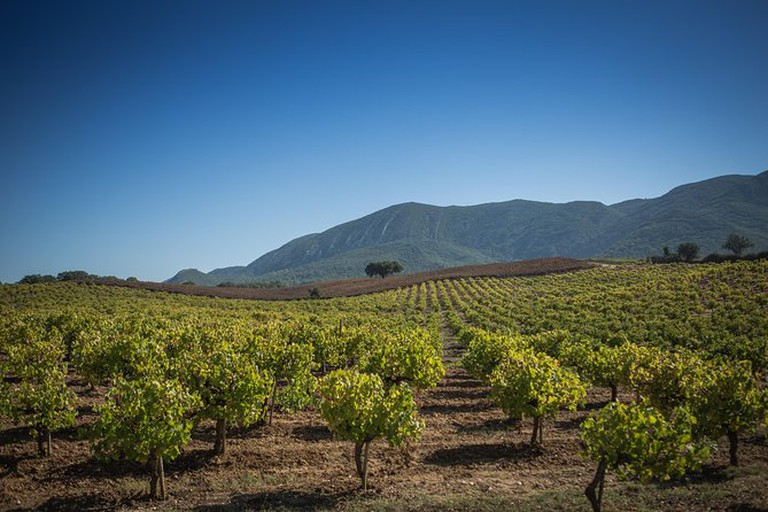 Discover the Arrábida region and its wines